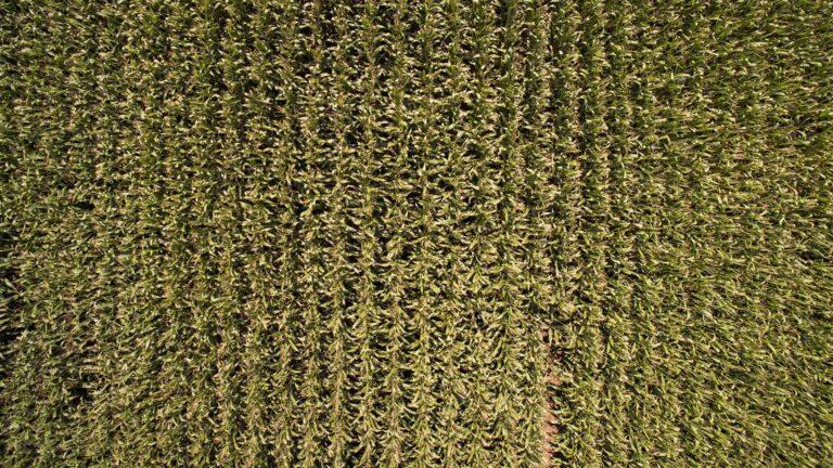 Xornada Dekalb en Santa Comba – Monsanto Agricultura